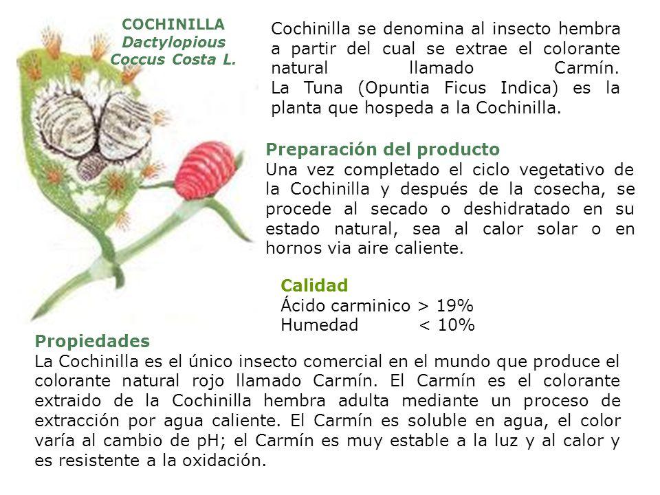 Cochinilla se denomina al insecto hembra a partir del cual se extrae el colorante natural llamado Carmín. La Tuna (Opuntia Ficus Indica) es la planta