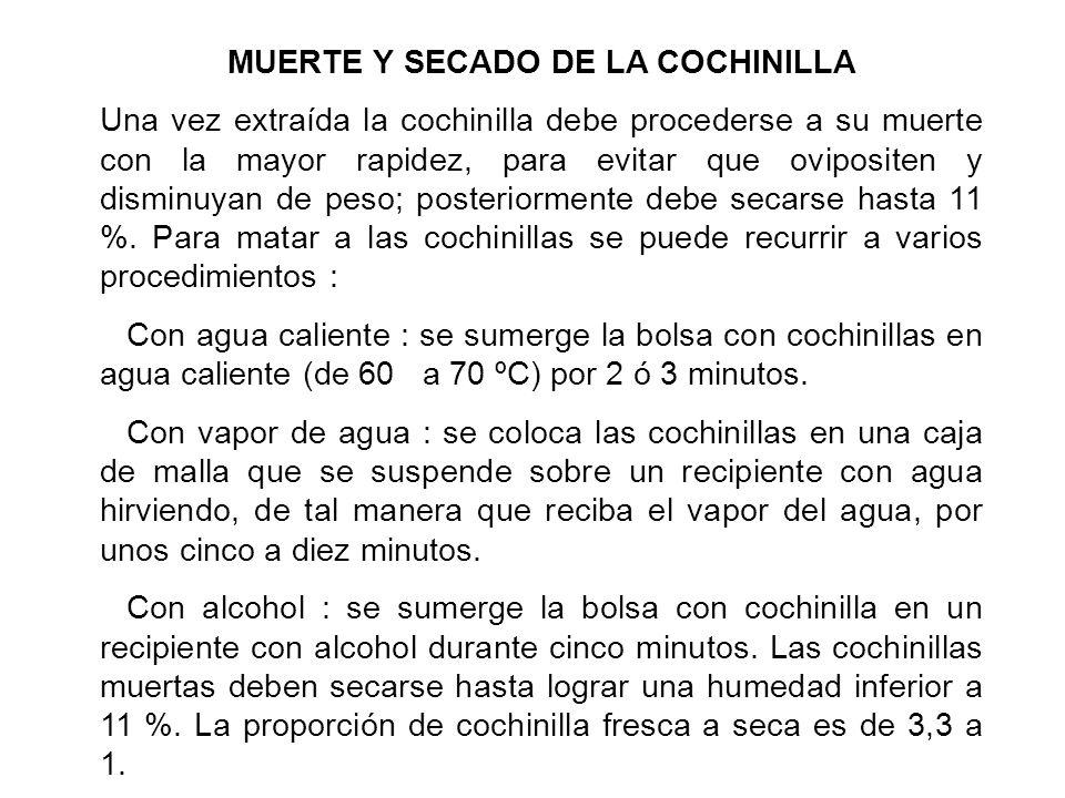 MUERTE Y SECADO DE LA COCHINILLA Una vez extraída la cochinilla debe procederse a su muerte con la mayor rapidez, para evitar que ovipositen y disminu