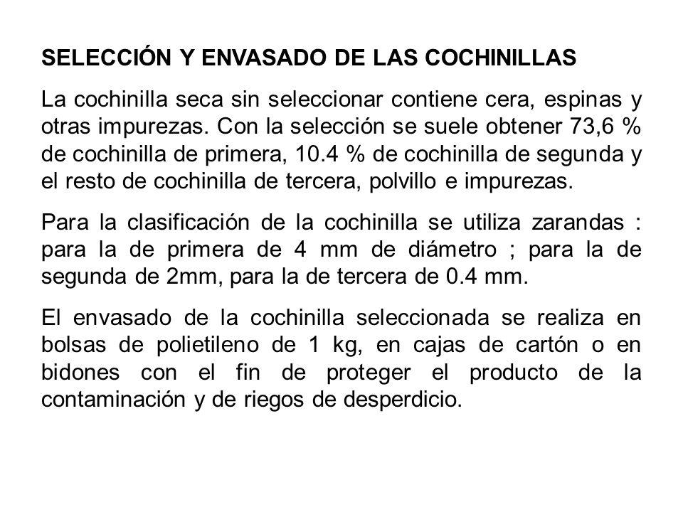 SELECCIÓN Y ENVASADO DE LAS COCHINILLAS La cochinilla seca sin seleccionar contiene cera, espinas y otras impurezas. Con la selección se suele obtener