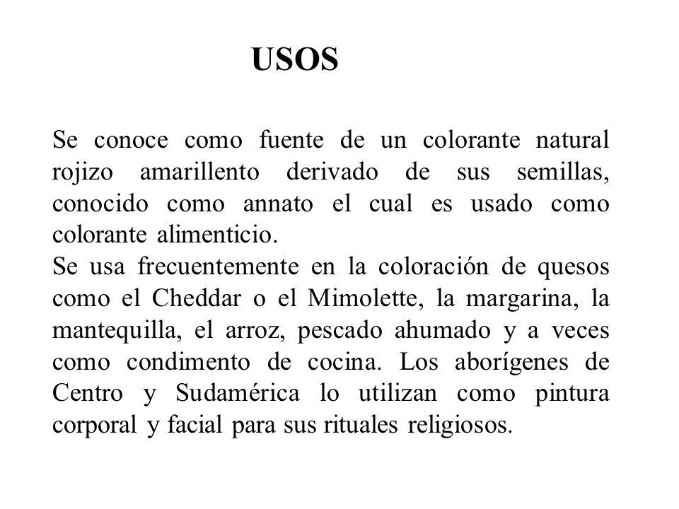 USOS Se conoce como fuente de un colorante natural rojizo amarillento derivado de sus semillas, conocido como annato el cual es usado como colorante a