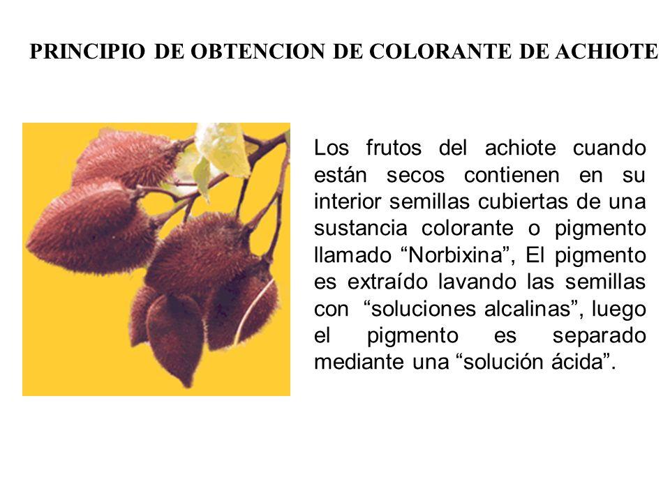 PRINCIPIO DE OBTENCION DE COLORANTE DE ACHIOTE Los frutos del achiote cuando están secos contienen en su interior semillas cubiertas de una sustancia