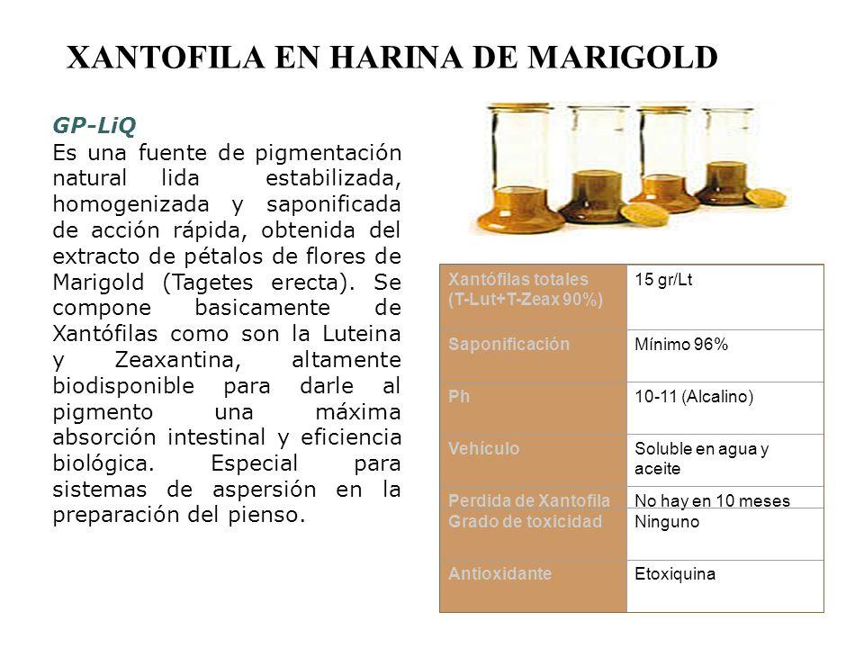 XANTOFILA EN HARINA DE MARIGOLD GP-LiQ Es una fuente de pigmentación natural lida estabilizada, homogenizada y saponificada de acción rápida, obtenida