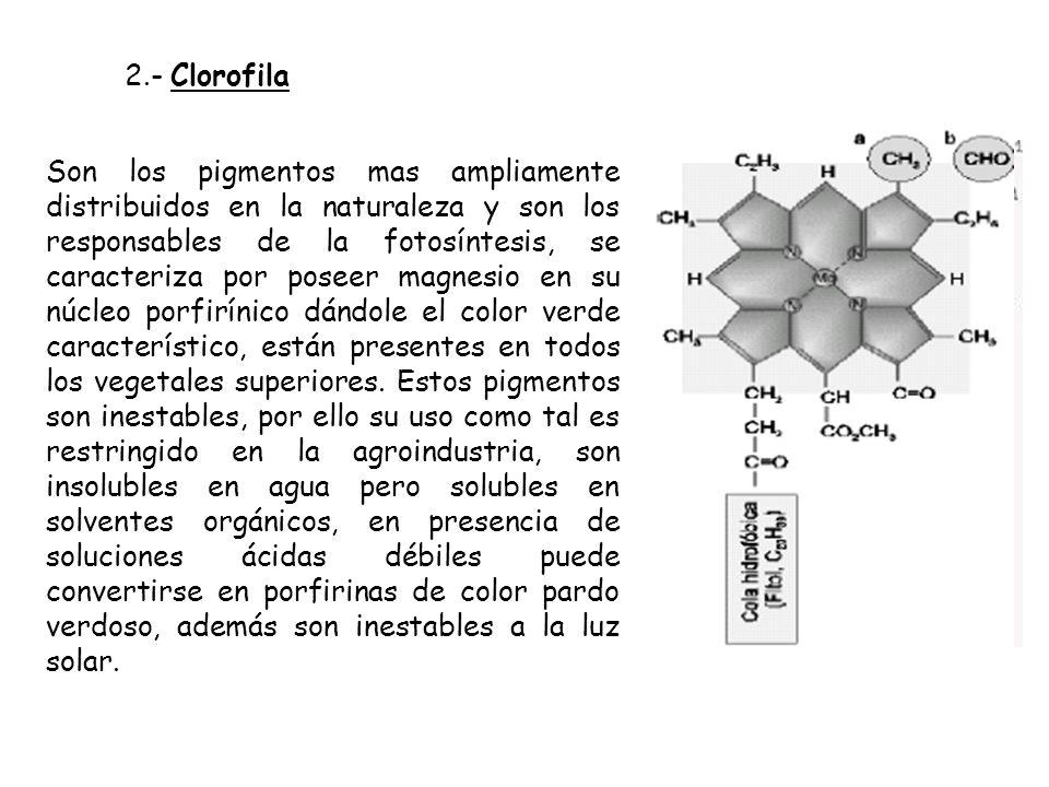 2.- Clorofila Son los pigmentos mas ampliamente distribuidos en la naturaleza y son los responsables de la fotosíntesis, se caracteriza por poseer mag
