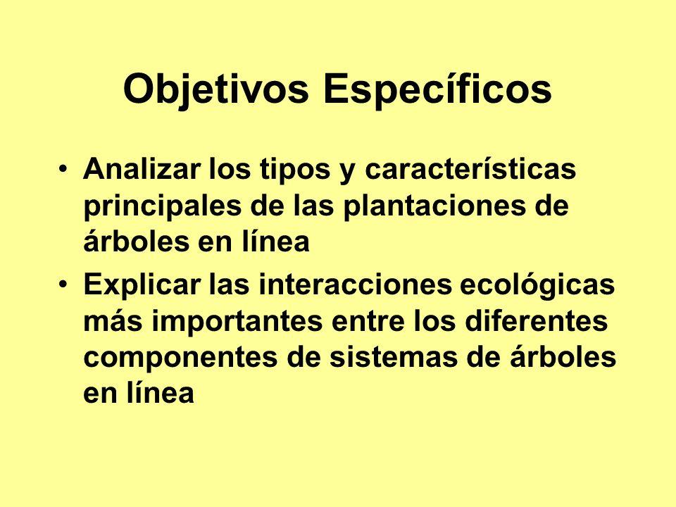 Objetivos Específicos Analizar los tipos y características principales de las plantaciones de árboles en línea Explicar las interacciones ecológicas más importantes entre los diferentes componentes de sistemas de árboles en línea