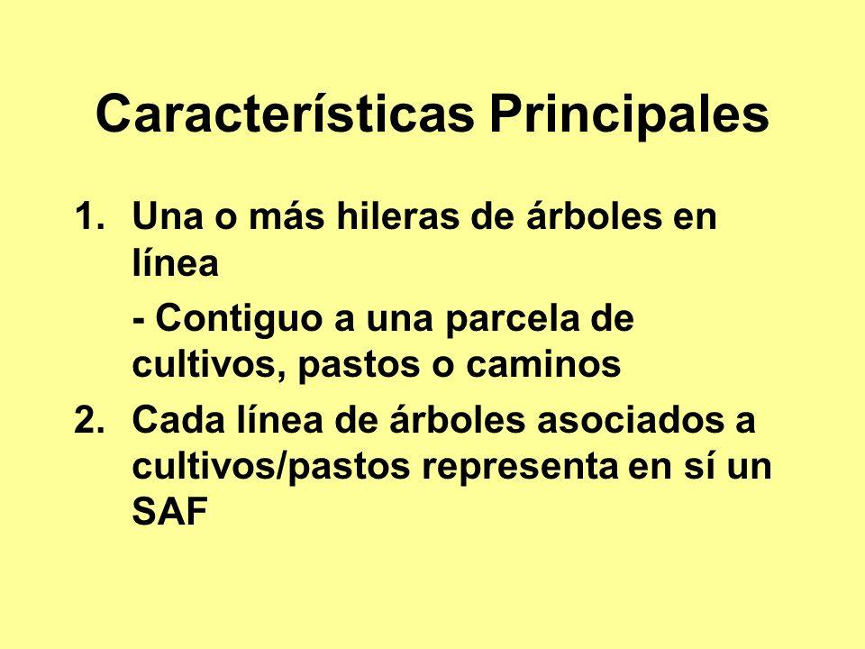 Características Principales 1.Una o más hileras de árboles en línea - Contiguo a una parcela de cultivos, pastos o caminos 2.