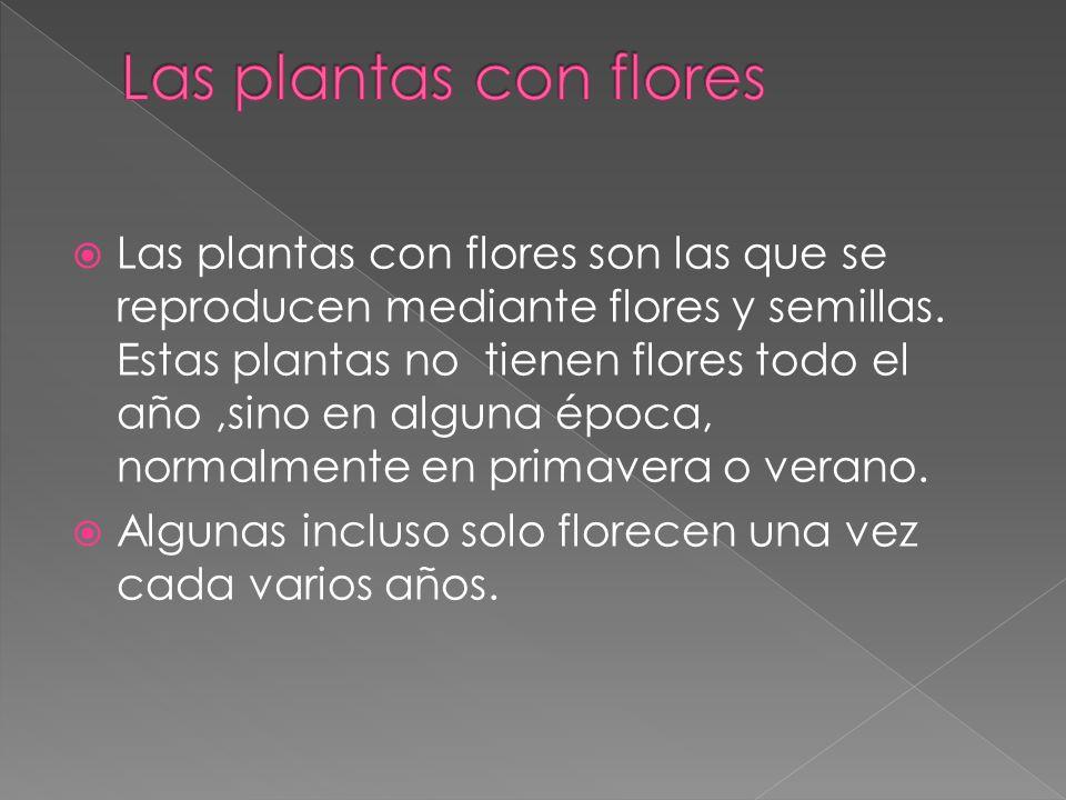 Las plantas con flores son las que se reproducen mediante flores y semillas. Estas plantas no tienen flores todo el año,sino en alguna época, normalme