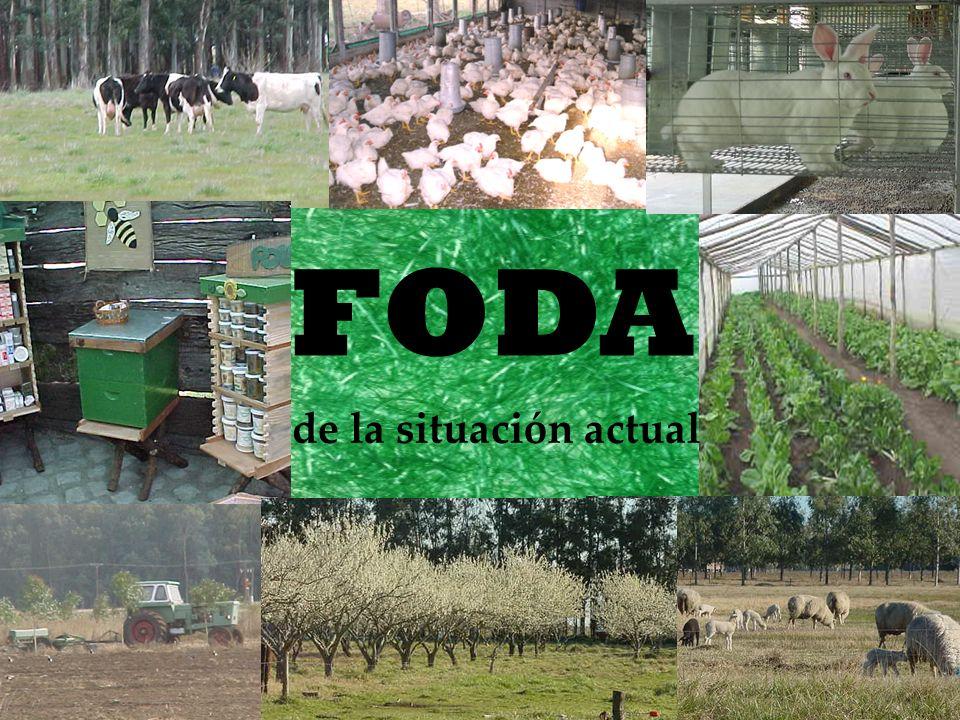 de la situación actual FODA