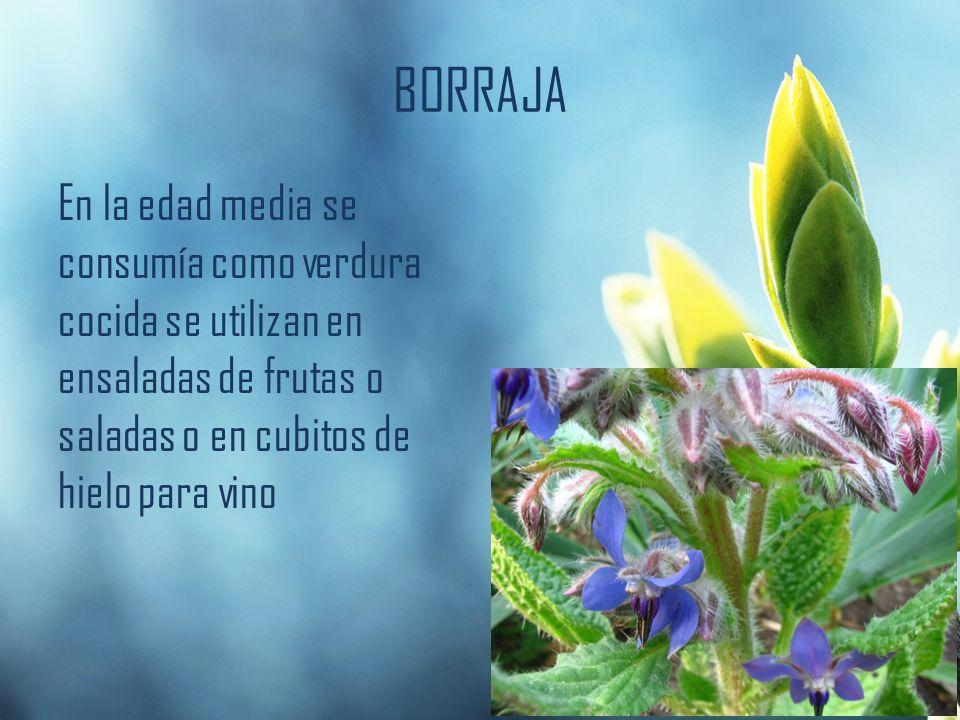 BORRAJA En la edad media se consumía como verdura cocida se utilizan en ensaladas de frutas o saladas o en cubitos de hielo para vino
