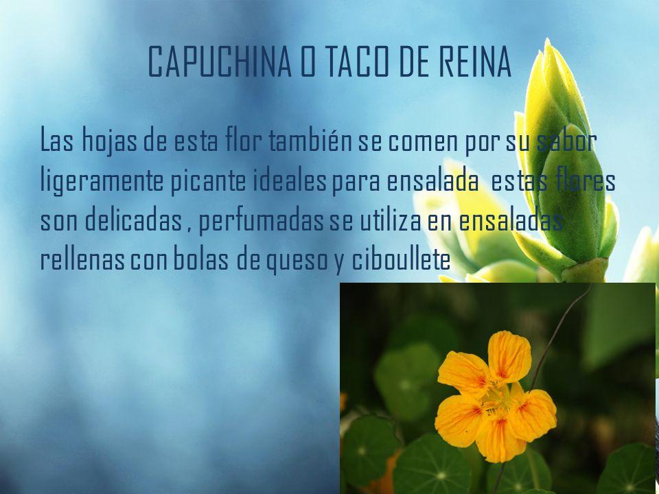 CAPUCHINA O TACO DE REINA Las hojas de esta flor también se comen por su sabor ligeramente picante ideales para ensalada estas flores son delicadas, p