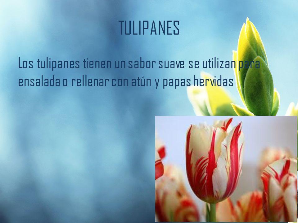 TULIPANES Los tulipanes tienen un sabor suave se utilizan para ensalada o rellenar con atún y papas hervidas
