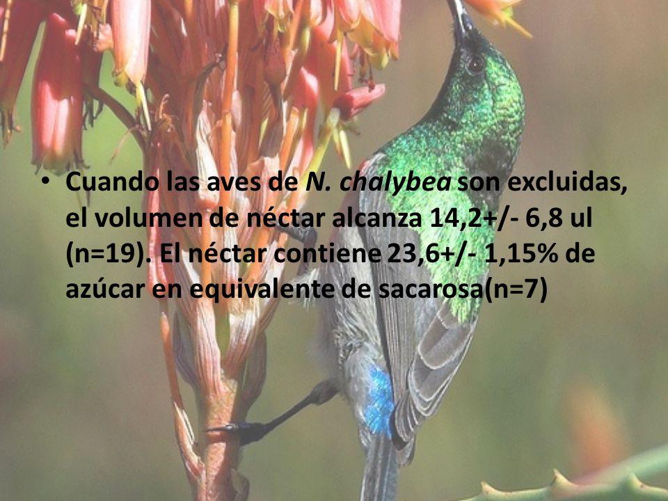 Cuando las aves de N. chalybea son excluidas, el volumen de néctar alcanza 14,2+/- 6,8 ul (n=19). El néctar contiene 23,6+/- 1,15% de azúcar en equiva