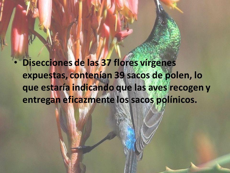 Disecciones de las 37 flores vírgenes expuestas, contenían 39 sacos de polen, lo que estaría indicando que las aves recogen y entregan eficazmente los