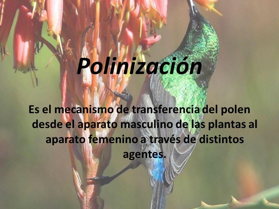 Polinización Es el mecanismo de transferencia del polen desde el aparato masculino de las plantas al aparato femenino a través de distintos agentes.