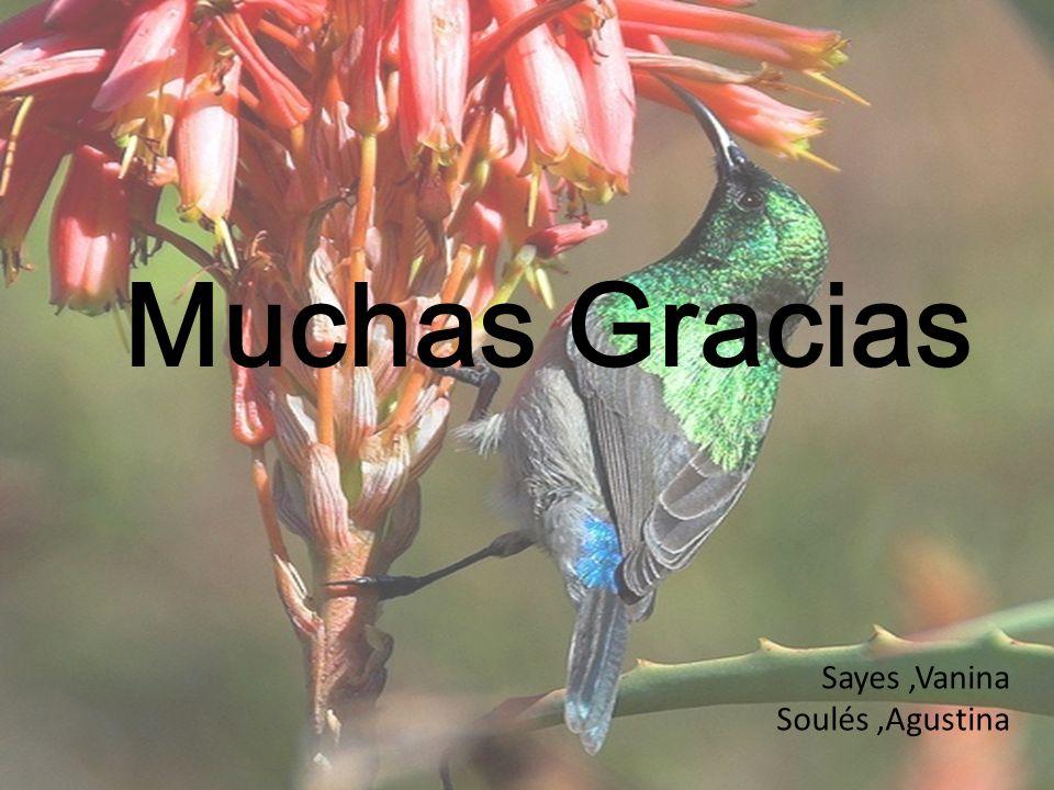Muchas Gracias Sayes,Vanina Soulés,Agustina