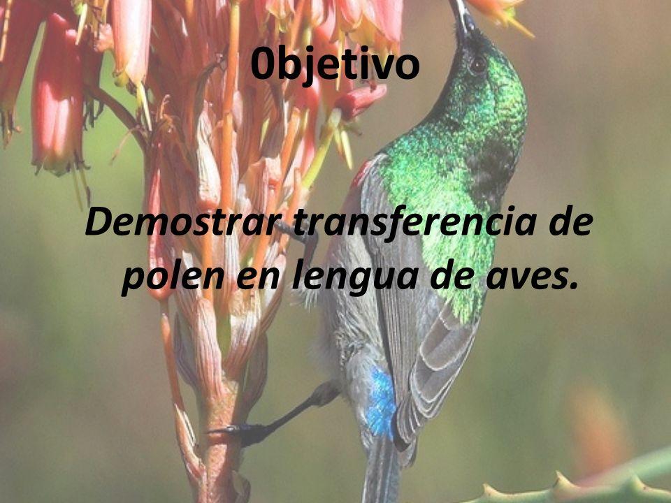 0bjetivo Demostrar transferencia de polen en lengua de aves.