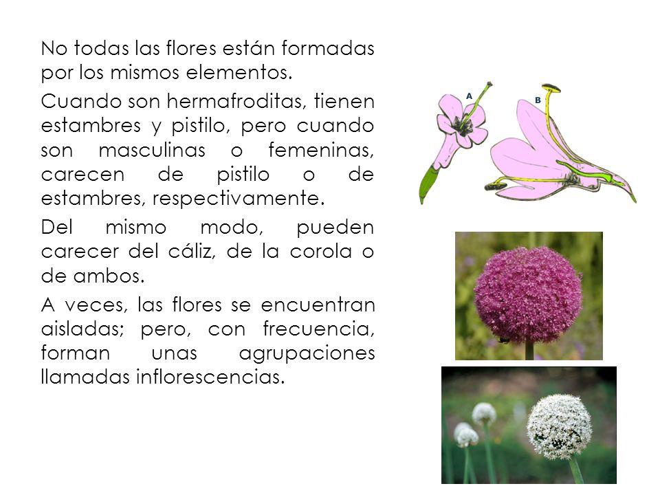No todas las flores están formadas por los mismos elementos. Cuando son hermafroditas, tienen estambres y pistilo, pero cuando son masculinas o femeni
