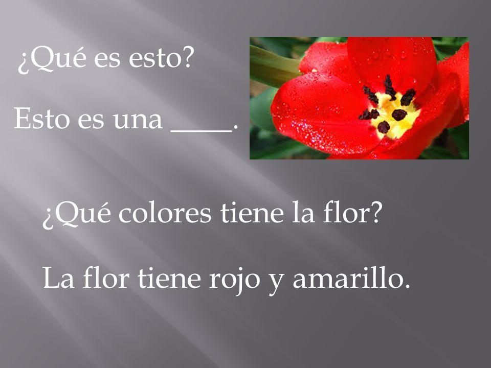 ¿Qué es esto? Esto es una ____. ¿Qué colores tiene la flor? La flor tiene rojo y amarillo.