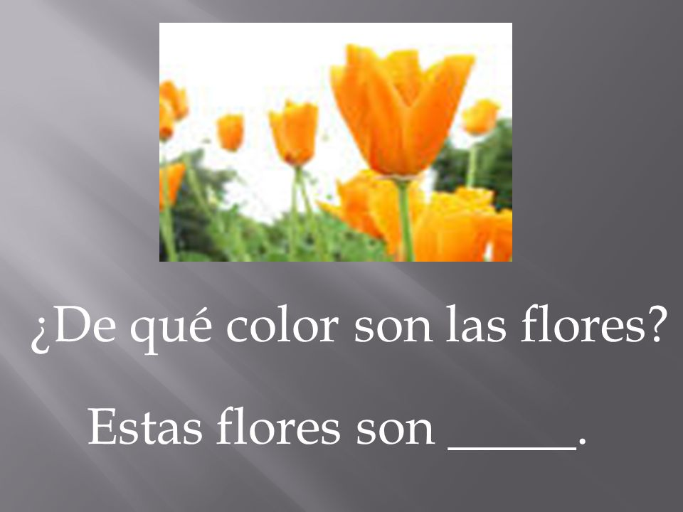 ¿De qué color son las flores? Estas flores son _____.
