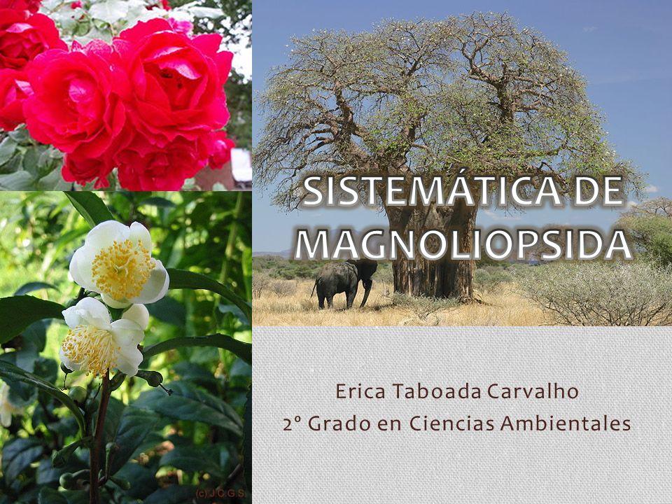 Erica Taboada Carvalho 2º Grado en Ciencias Ambientales