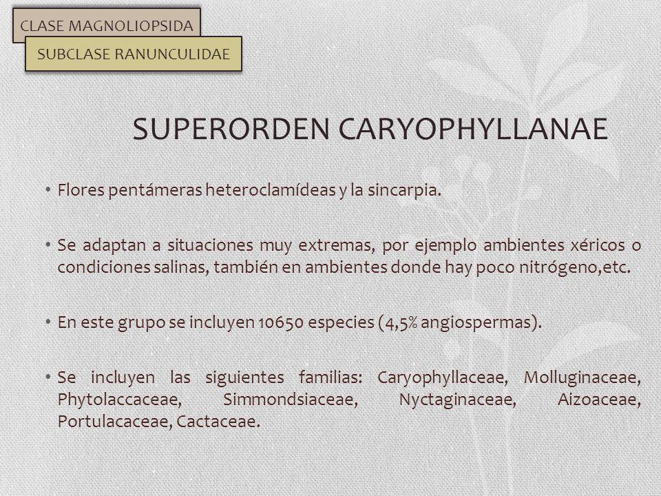 Flores pentámeras heteroclamídeas y la sincarpia. Se adaptan a situaciones muy extremas, por ejemplo ambientes xéricos o condiciones salinas, también