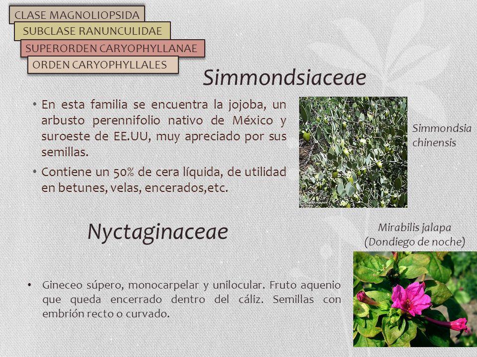 En esta familia se encuentra la jojoba, un arbusto perennifolio nativo de México y suroeste de EE.UU, muy apreciado por sus semillas. Contiene un 50%