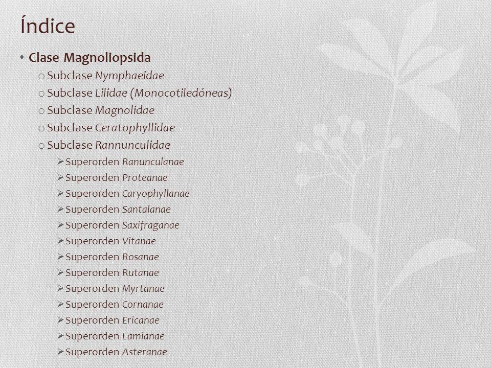 Índice Clase Magnoliopsida o Subclase Nymphaeidae o Subclase Lilidae (Monocotiledóneas) o Subclase Magnolidae o Subclase Ceratophyllidae o Subclase Ra