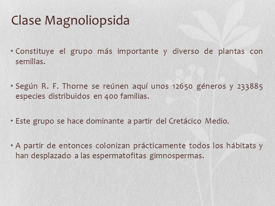 Clase Magnoliopsida Constituye el grupo más importante y diverso de plantas con semillas. Según R. F. Thorne se reúnen aquí unos 12650 géneros y 23388
