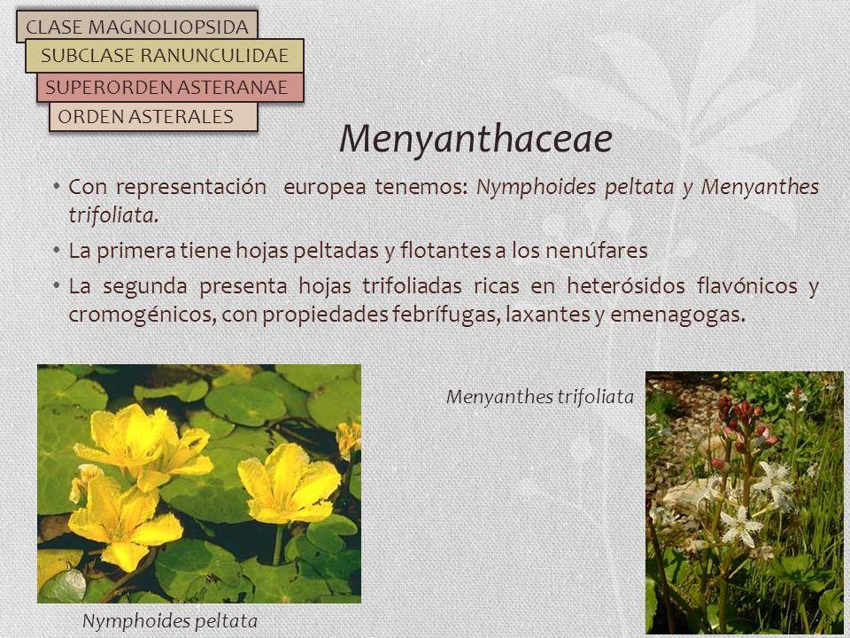 Con representación europea tenemos: Nymphoides peltata y Menyanthes trifoliata. La primera tiene hojas peltadas y flotantes a los nenúfares La segunda