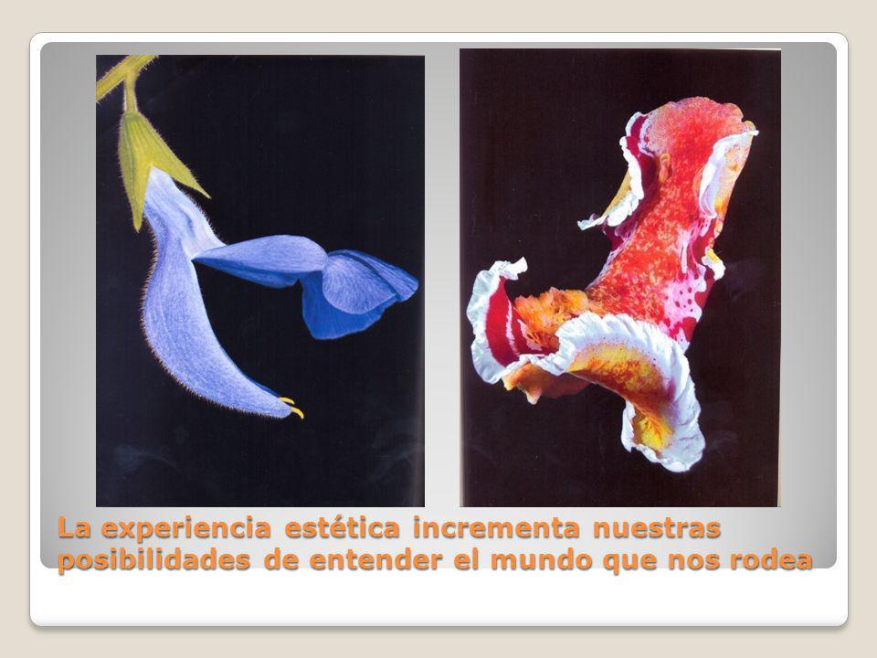 La experiencia estética incrementa nuestras posibilidades de entender el mundo que nos rodea
