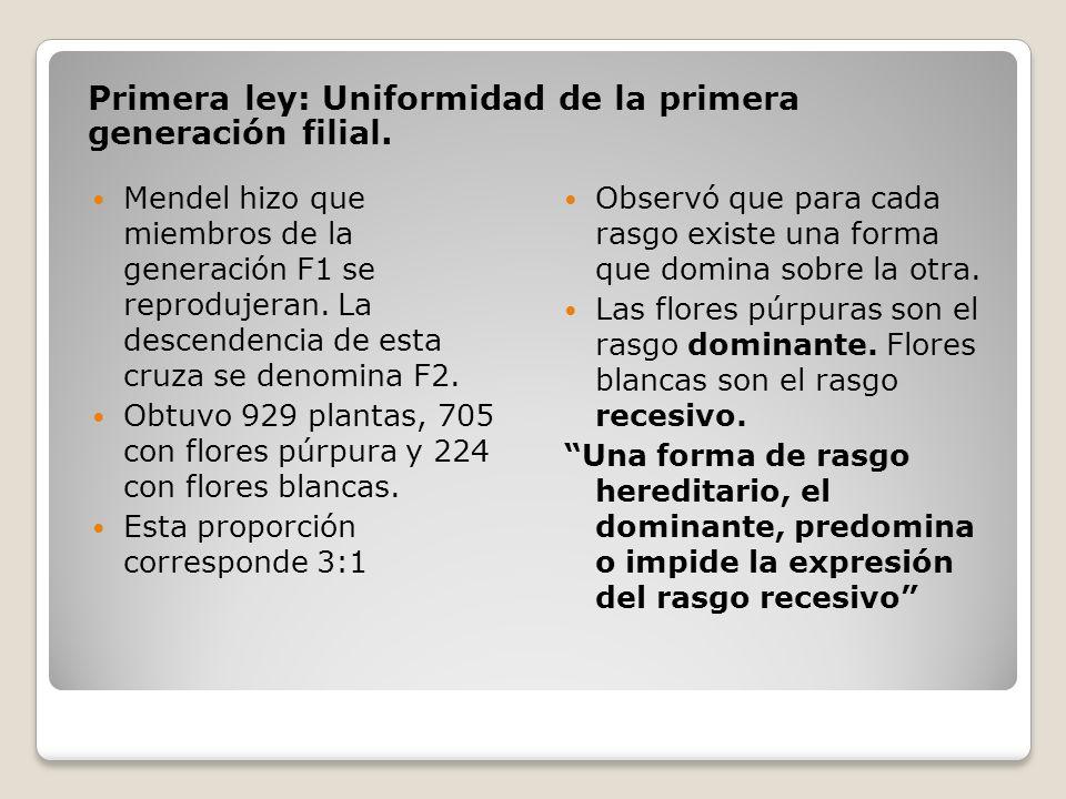 Primera ley: Uniformidad de la primera generación filial. Mendel hizo que miembros de la generación F1 se reprodujeran. La descendencia de esta cruza