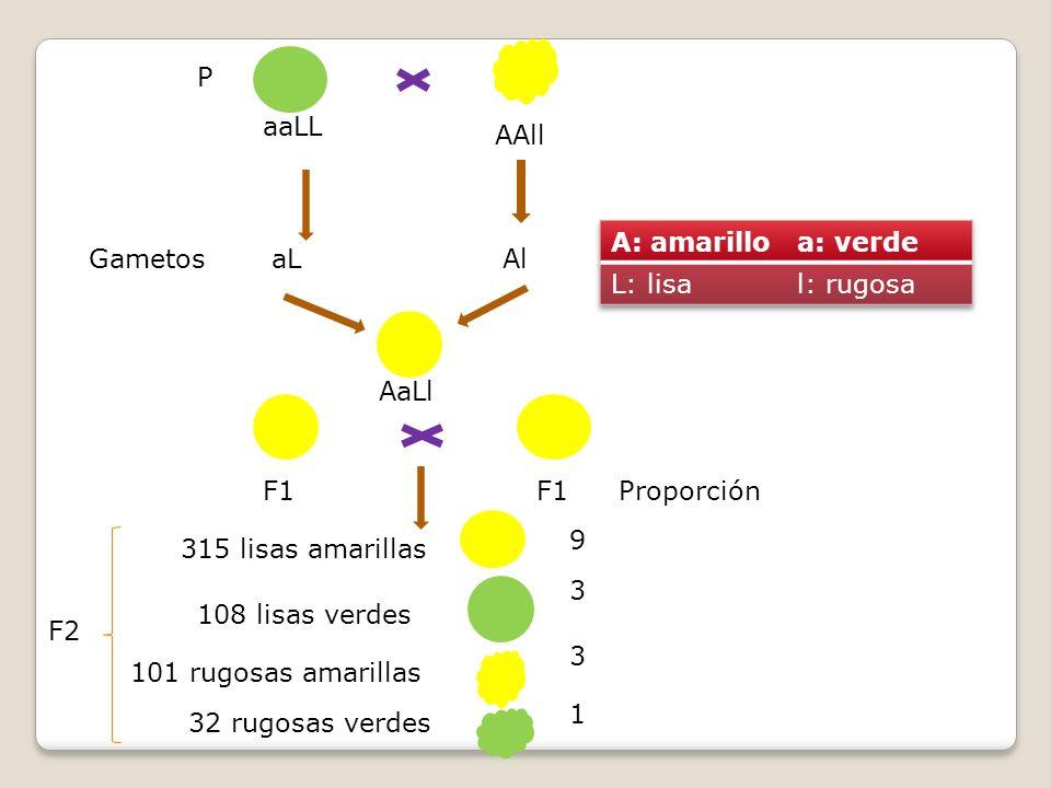 aaLL AAll aLAl AaLl F1 Gametos P Proporción 9 3 3 1 315 lisas amarillas 108 lisas verdes 101 rugosas amarillas 32 rugosas verdes F2