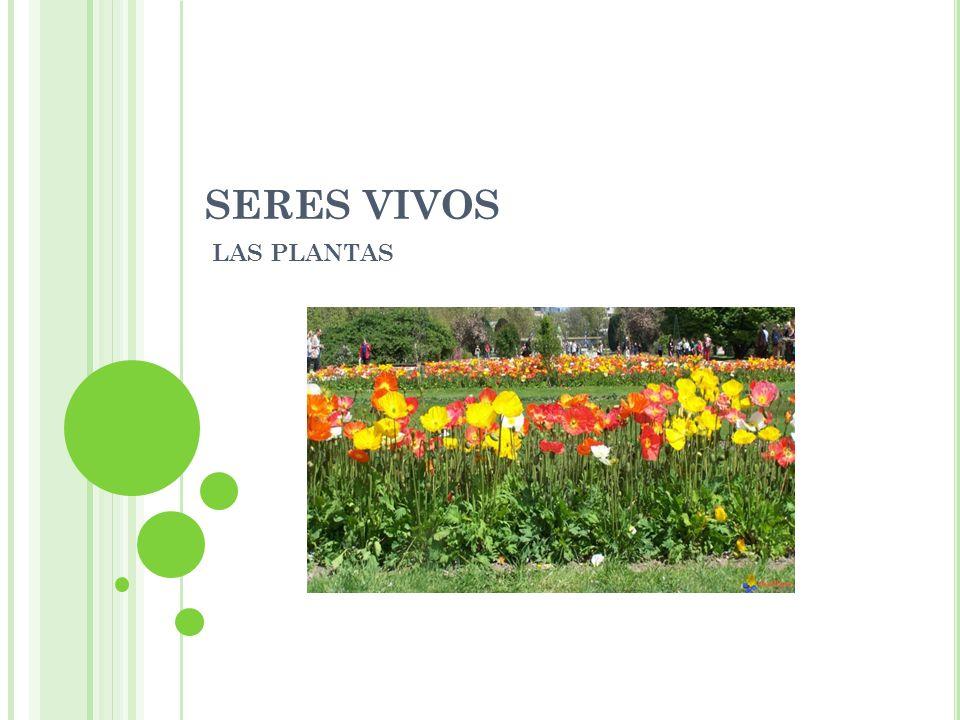 SERES VIVOS LAS PLANTAS