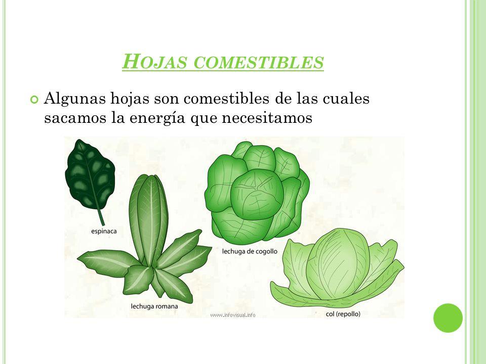 L A FOTOSÍNTESIS La fotosíntesis es el proceso mediante el cual la planta fabrica su propio alimento y para ello la planta necesita: luz solar, agua, sales minerales y dióxido de carbono