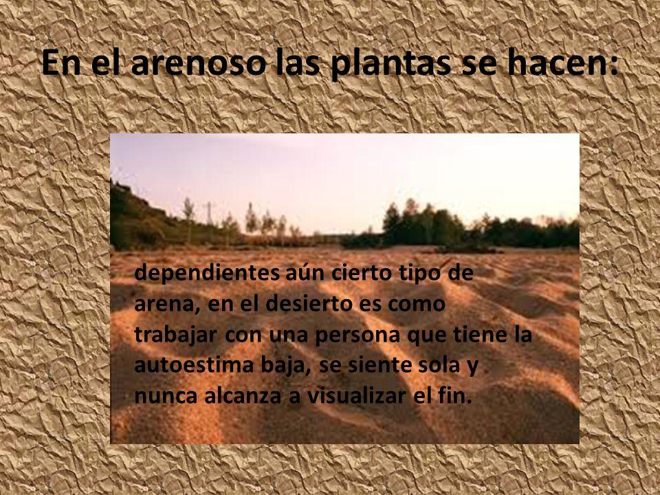 En el arenoso las plantas se hacen: dependientes aún cierto tipo de arena, en el desierto es como trabajar con una persona que tiene la autoestima baj