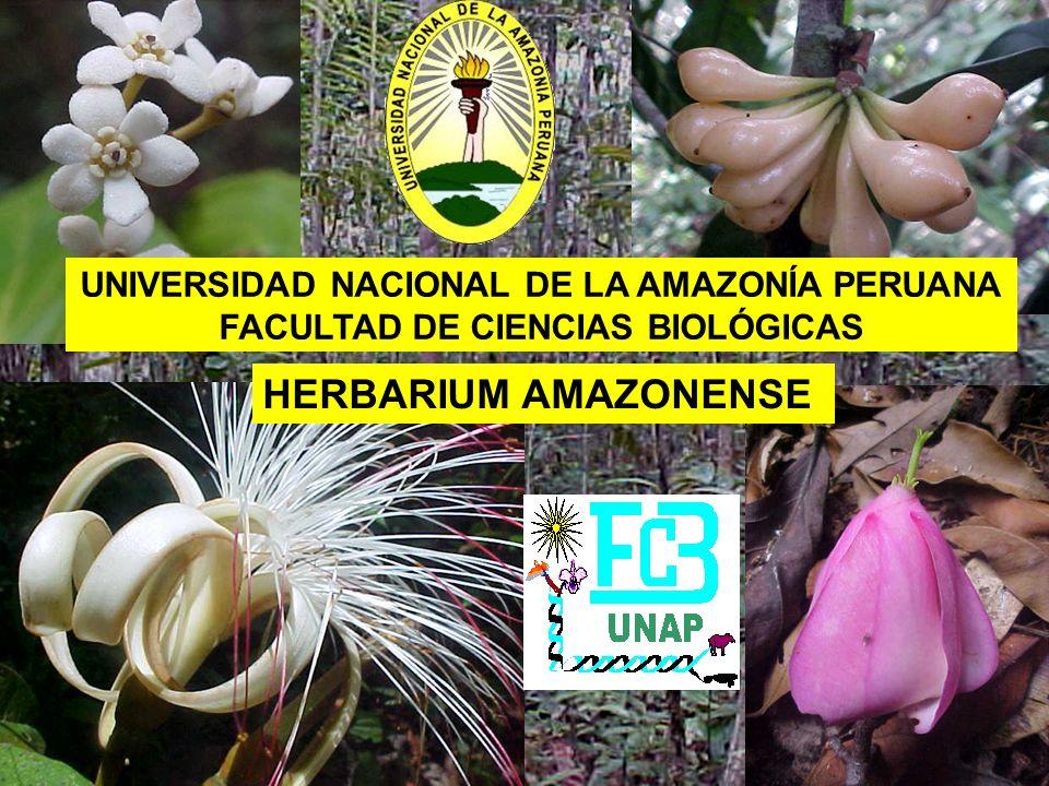 El Herbarium Amazonense fue creado en 1972 por iniciativa del Dr.