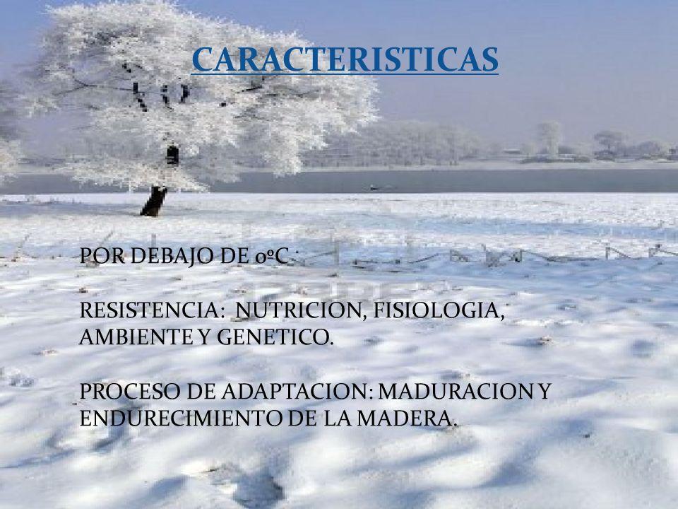 CARACTERISTICAS POR DEBAJO DE 0ºC RESISTENCIA: NUTRICION, FISIOLOGIA, AMBIENTE Y GENETICO. PROCESO DE ADAPTACION: MADURACION Y ENDURECIMIENTO DE LA MA