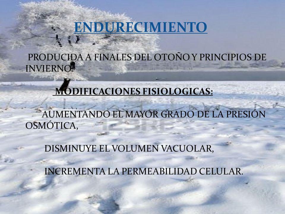 PRODUCIDA A FINALES DEL OTOÑO Y PRINCIPIOS DE INVIERNO.