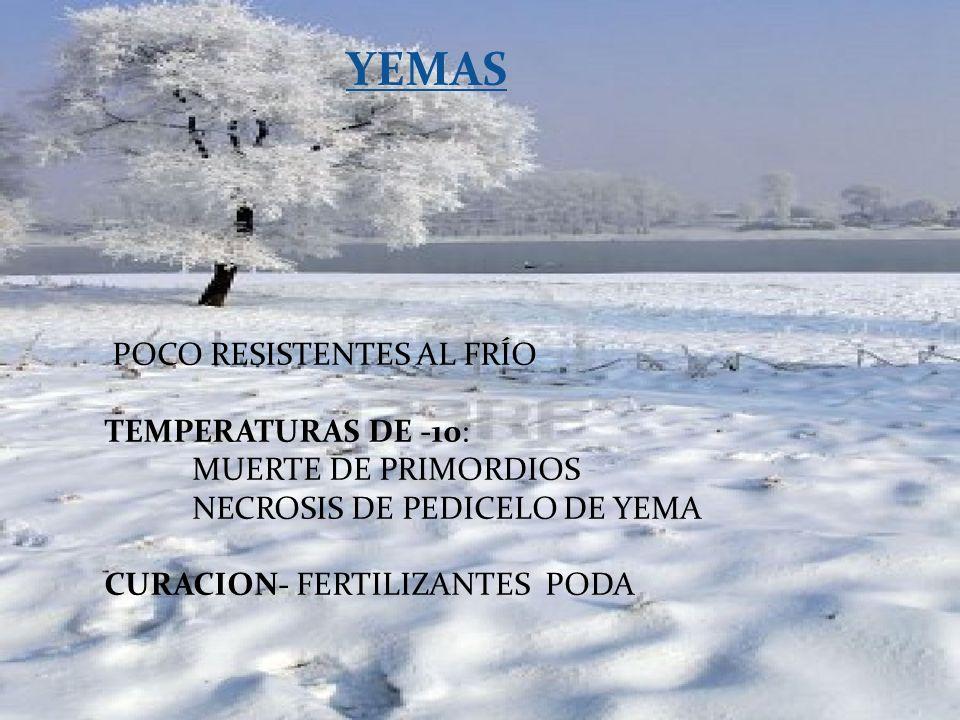 YEMAS POCO RESISTENTES AL FRÍO TEMPERATURAS DE -10: MUERTE DE PRIMORDIOS NECROSIS DE PEDICELO DE YEMA CURACION- FERTILIZANTES PODA