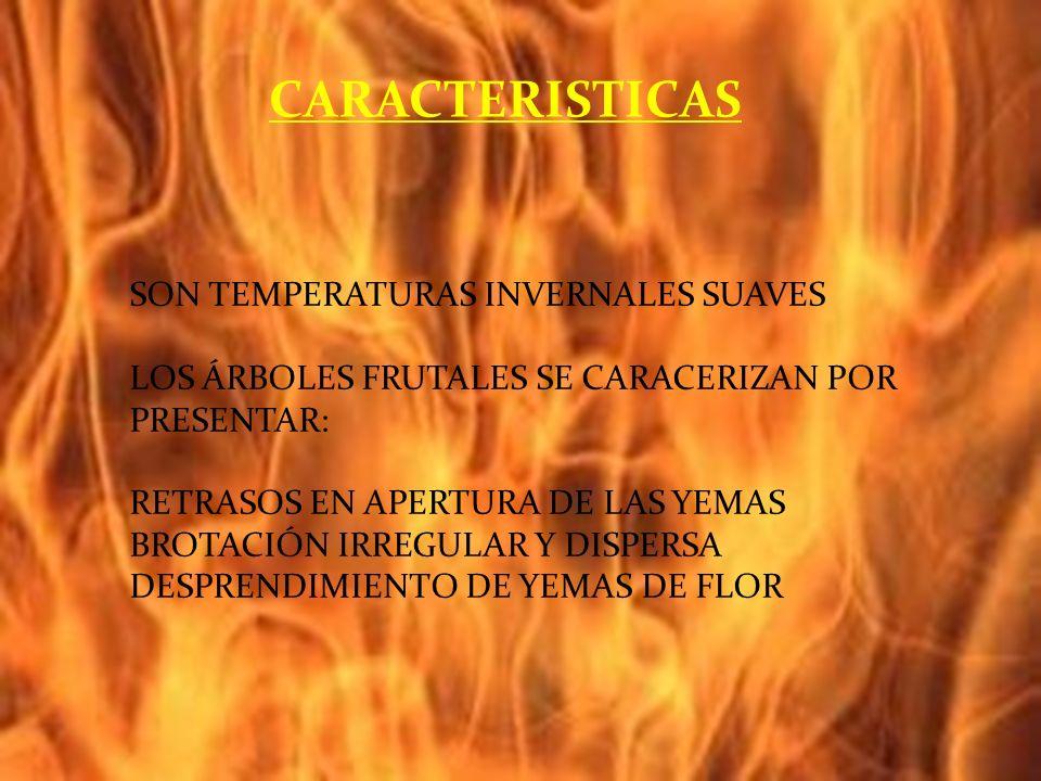 SON TEMPERATURAS INVERNALES SUAVES LOS ÁRBOLES FRUTALES SE CARACERIZAN POR PRESENTAR: RETRASOS EN APERTURA DE LAS YEMAS BROTACIÓN IRREGULAR Y DISPERSA DESPRENDIMIENTO DE YEMAS DE FLOR CARACTERISTICAS