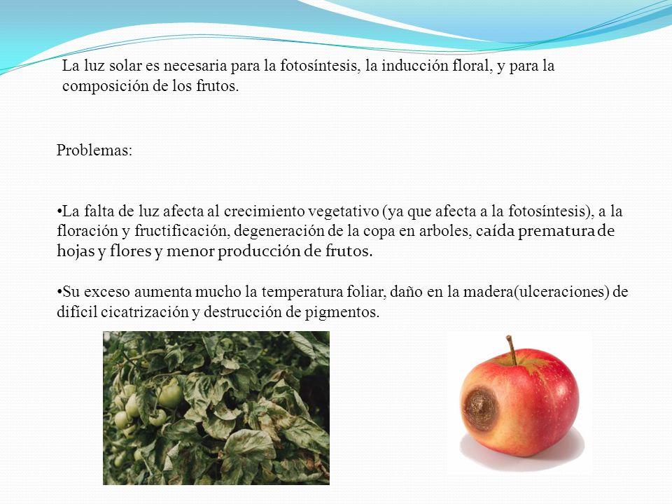 La luz solar es necesaria para la fotosíntesis, la inducción floral, y para la composición de los frutos. Problemas: La falta de luz afecta al crecimi