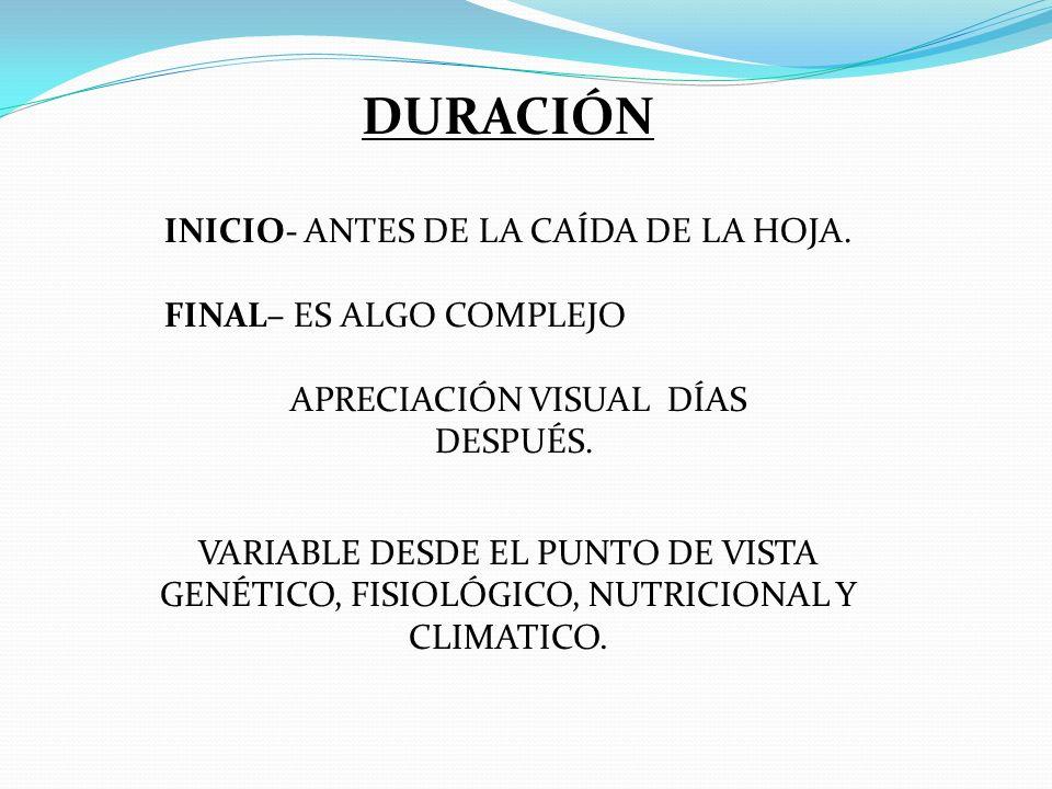 DURACIÓN INICIO- ANTES DE LA CAÍDA DE LA HOJA.