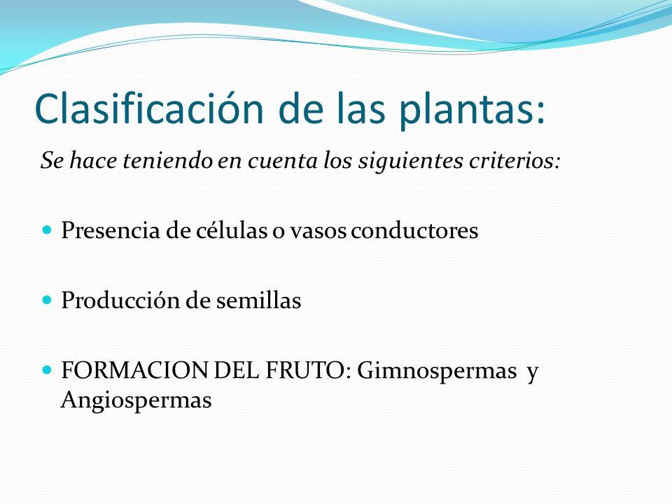 Clasificación de las plantas: Se hace teniendo en cuenta los siguientes criterios: Presencia de células o vasos conductores Producción de semillas FOR