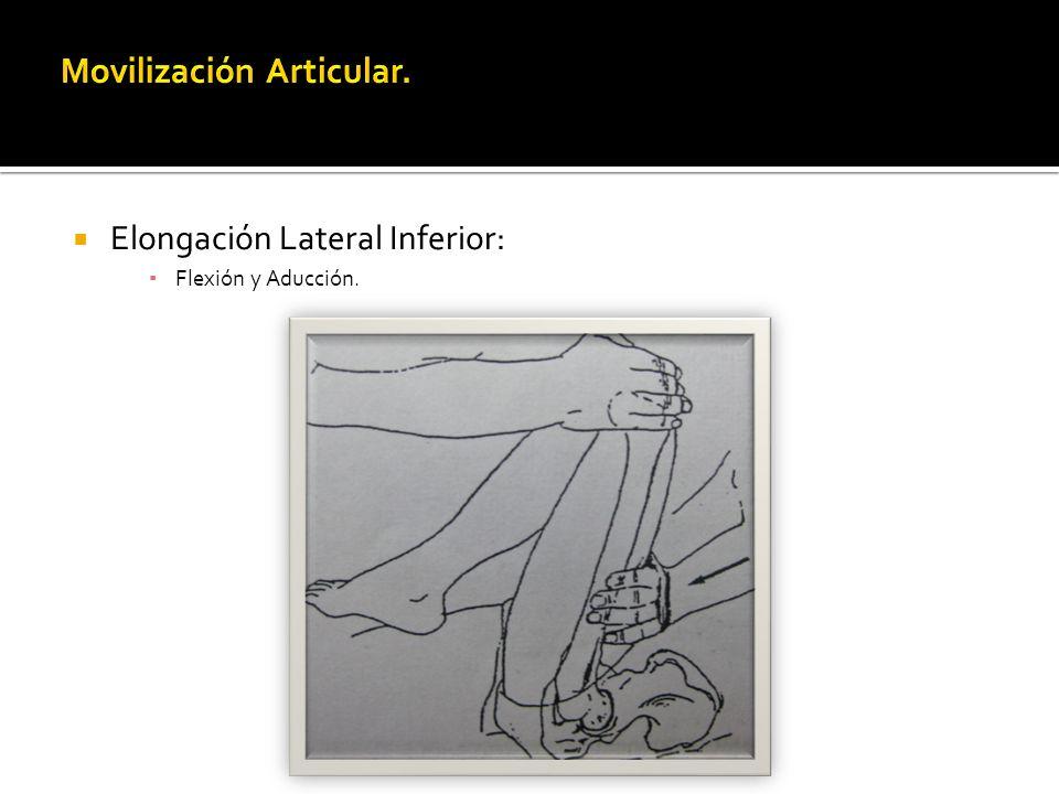 Elongación Lateral Inferior: Flexión y Aducción.