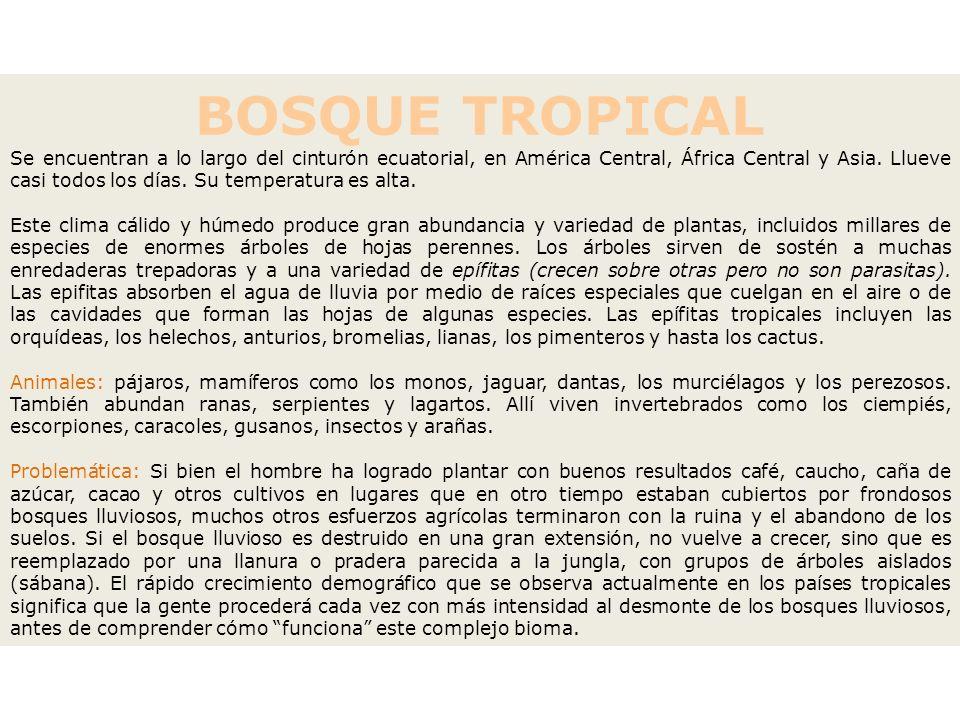 BOSQUE TROPICAL Se encuentran a lo largo del cinturón ecuatorial, en América Central, África Central y Asia. Llueve casi todos los días. Su temperatur