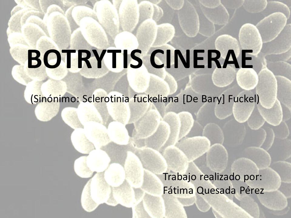 (Sinónimo: Sclerotinia fuckeliana [De Bary] Fuckel) BOTRYTIS CINERAE Trabajo realizado por: Fátima Quesada Pérez