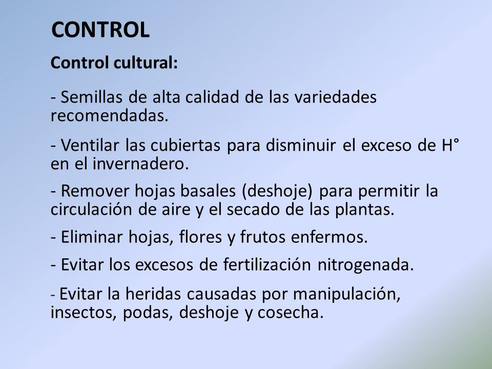Control cultural: - Semillas de alta calidad de las variedades recomendadas. - Ventilar las cubiertas para disminuir el exceso de H° en el invernadero