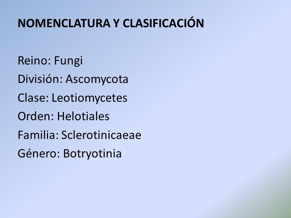 NOMENCLATURA Y CLASIFICACIÓN Reino: Fungi División: Ascomycota Clase: Leotiomycetes Orden: Helotiales Familia: Sclerotinicaeae Género: Botryotinia