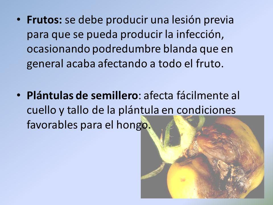Frutos: se debe producir una lesión previa para que se pueda producir la infección, ocasionando podredumbre blanda que en general acaba afectando a to