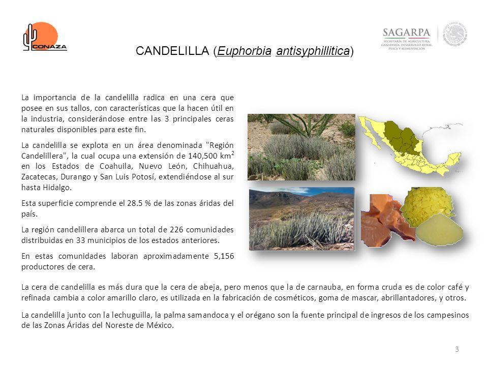 4 NOPAL - TUNA (Opuntia spp.) Las condiciones ambientales y las variables fisiológicas se asocian con un amplio rango de ecosistemas semiáridos con flora y fauna diversas en el norte de México, donde Opuntia es abundante y está ampliamente distribuida en comunidades especificas llamadas nopaleras.
