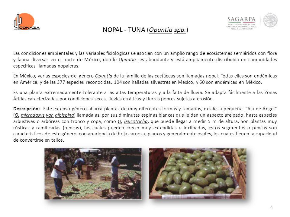 4 NOPAL - TUNA (Opuntia spp.) Las condiciones ambientales y las variables fisiológicas se asocian con un amplio rango de ecosistemas semiáridos con fl